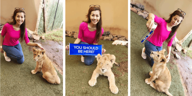 Millieleung play with baby lions