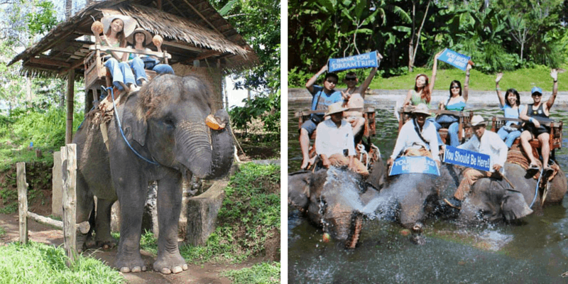 Elephant Ride Collage